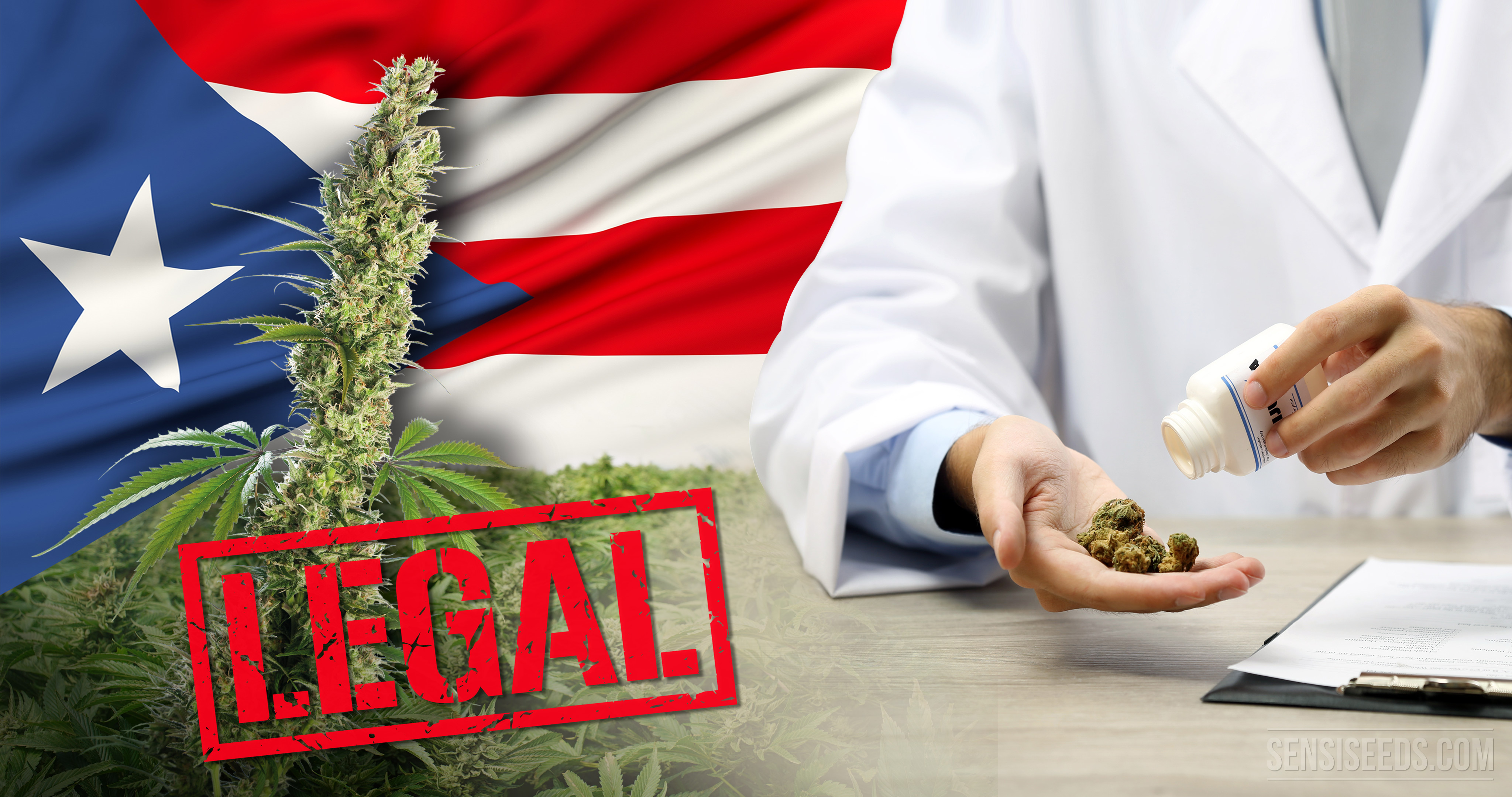 Puerto Rico bet on cannabis to activate economy