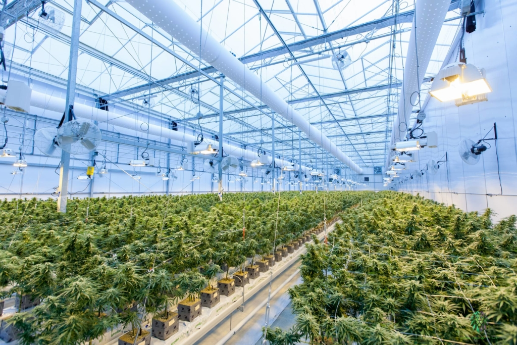 Sundial Growers make huge investments, are they good to buy?